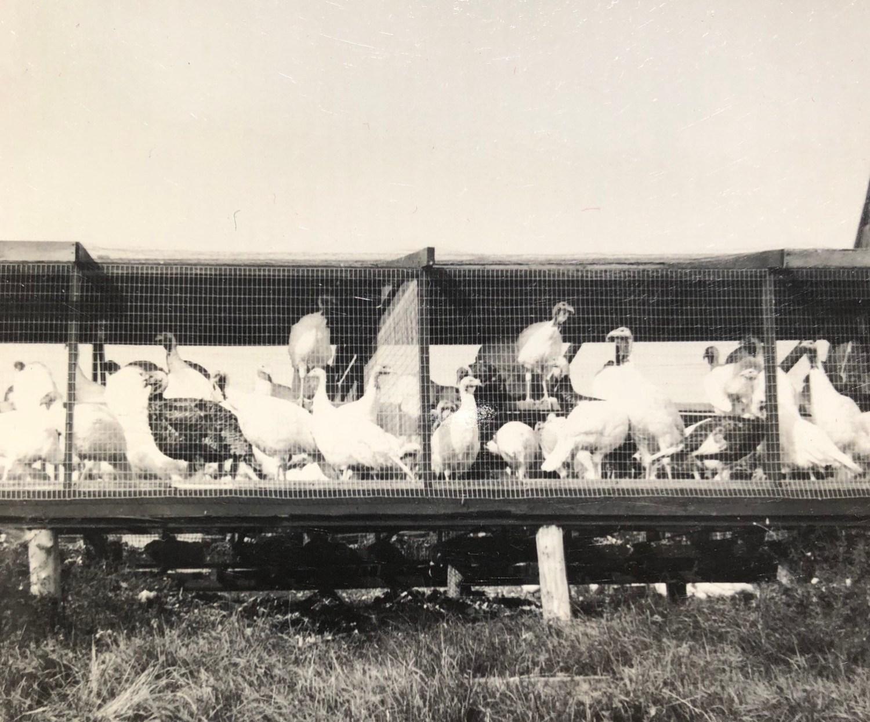 Maple Knoll Turkey Farm inventory, Burlington MA