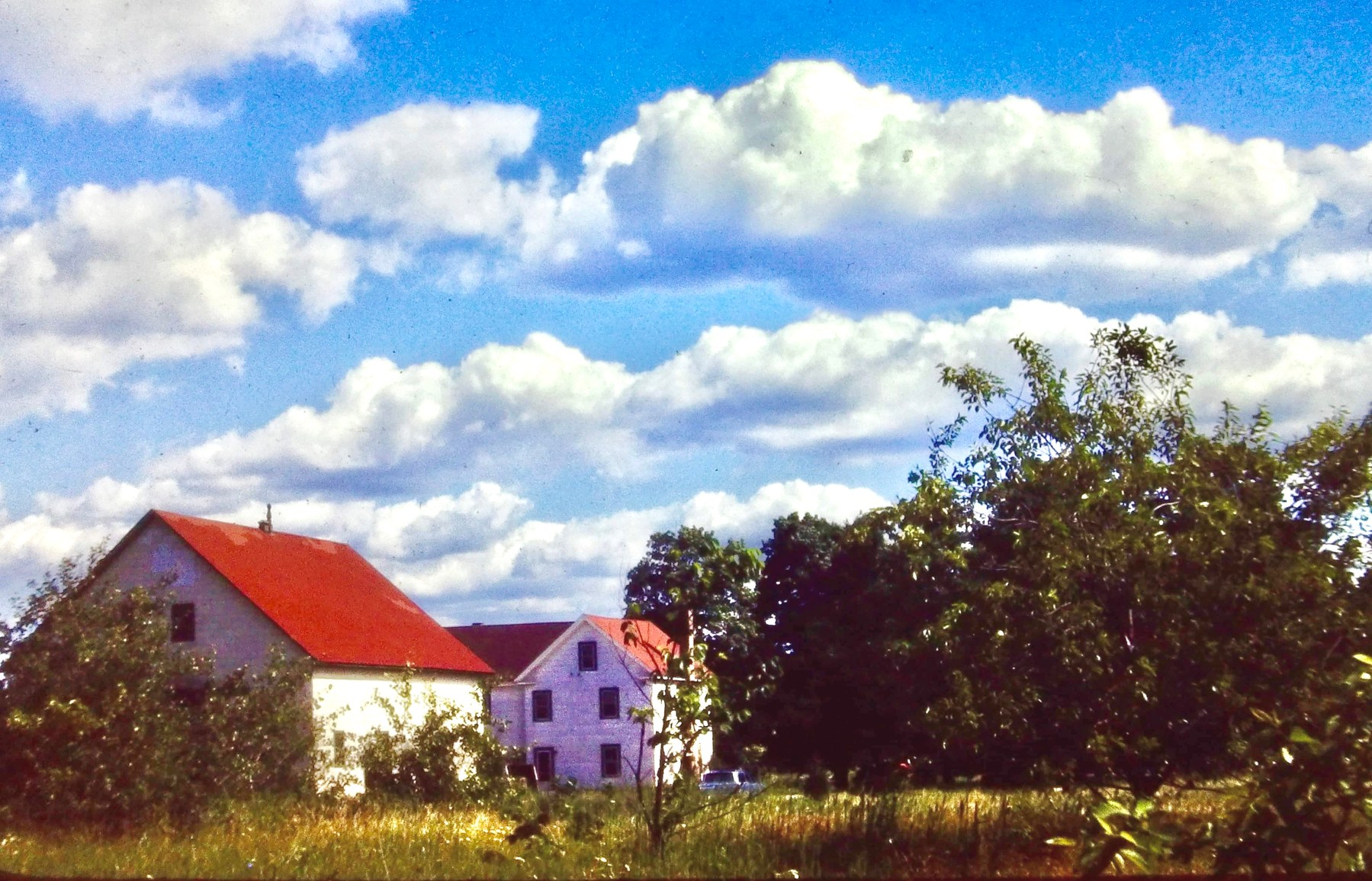 Seminatore house (Susan Salvato Alfano)