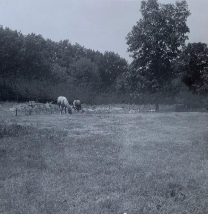 Ellery Lane cul-de-sac with horses