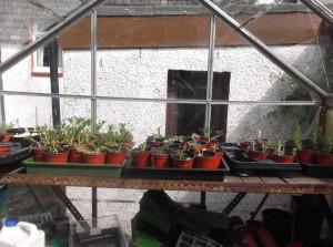 propagating bench