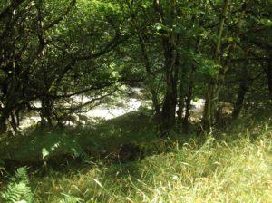 sunlit river rushing seen through trees