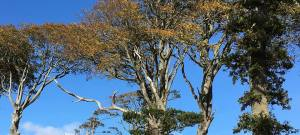 sky seen through trees