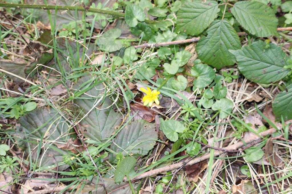 yellow flower amongst new greenery