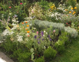 knotgarden and chamomile