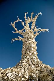 bone tree burning man