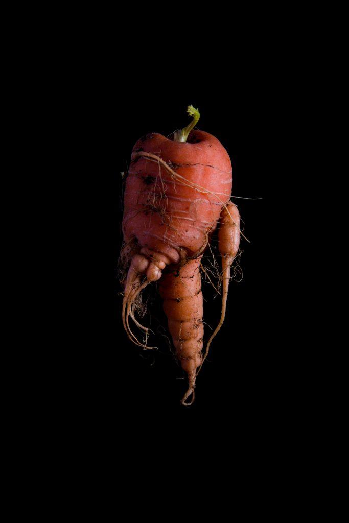 Carrot_12-12-2017-32