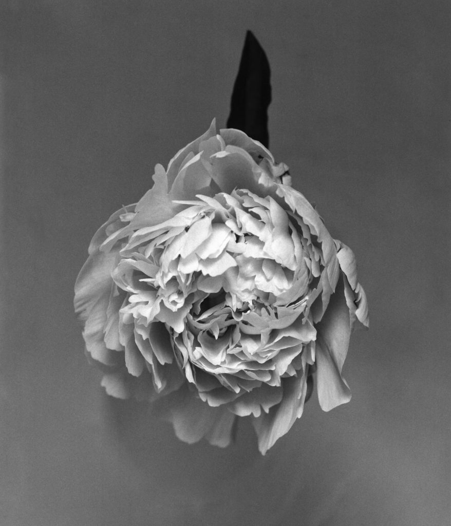 fleur_web-10