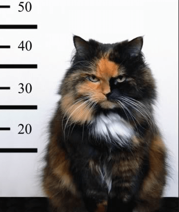 This cat got busted for his crimes against humans