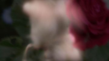Animomento 3 HD (00164)