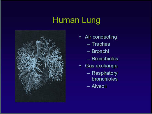 Human Lung-USEPA