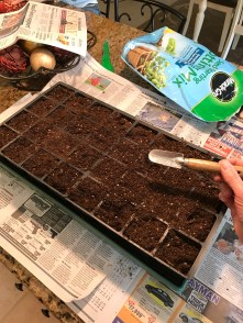 No self expanding soil plugs this year, just regular seed starting potting soil.