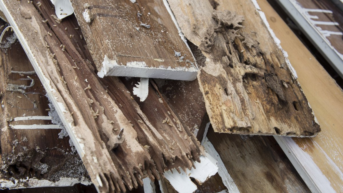 Wood damaged by termites.