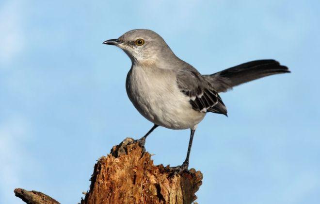 Bird on tree stump in yard.