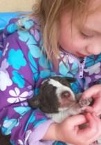newborn german shorthair pointer