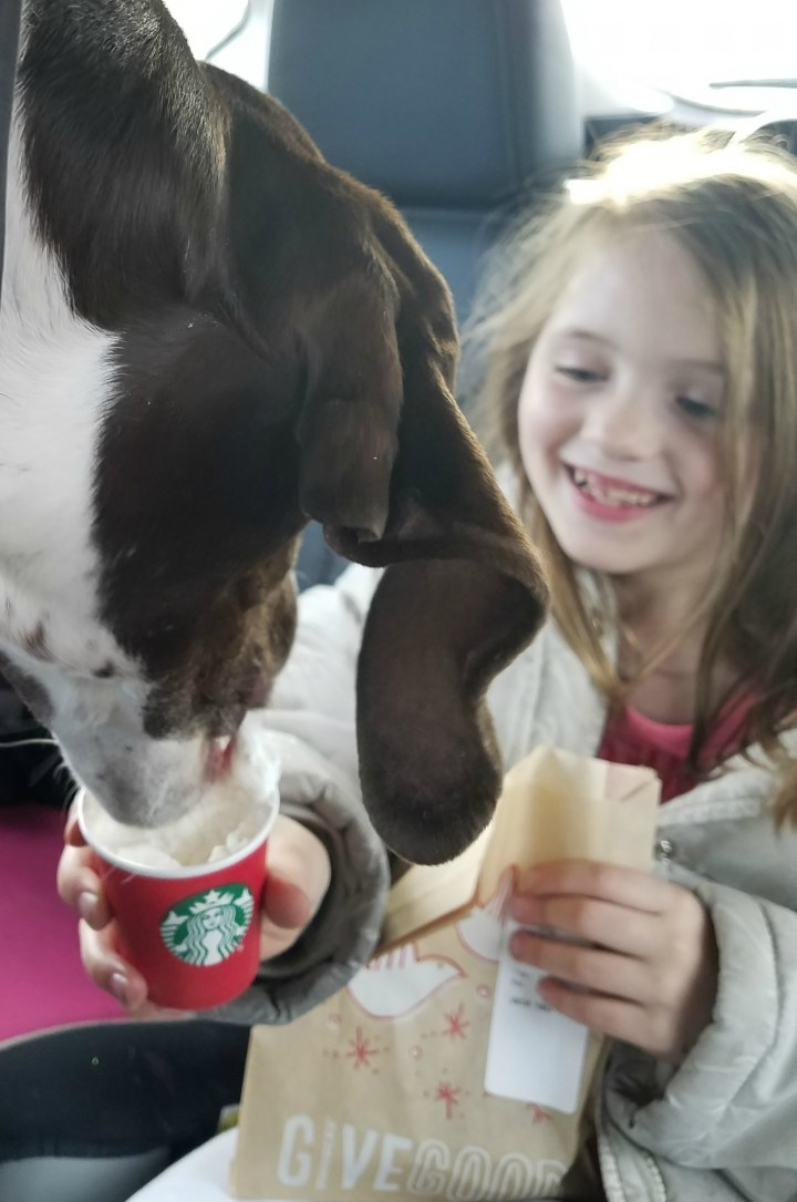starbucks puppuchino