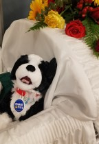 Funeral Stuffed Animals + Tips for Teens and Kids Going to a Viewing of a Loved One