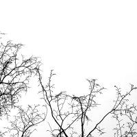 Tree Crop