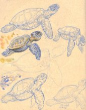 """Anything At All"" Music Video Art: Seaturtle Studies"