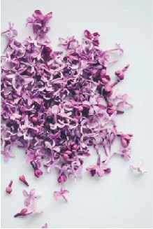 radiant-orchid-pantone-color-of-the-year2-01