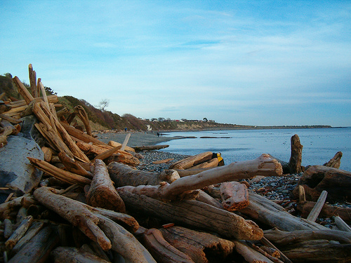 victoria driftwood