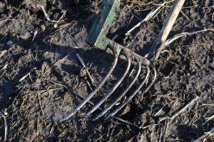 Curved tines of the Broadfork