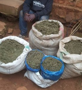 Burundi : La police saisit 32 kg de cannabis à Gitega ( Photo : intumwa 2019 )