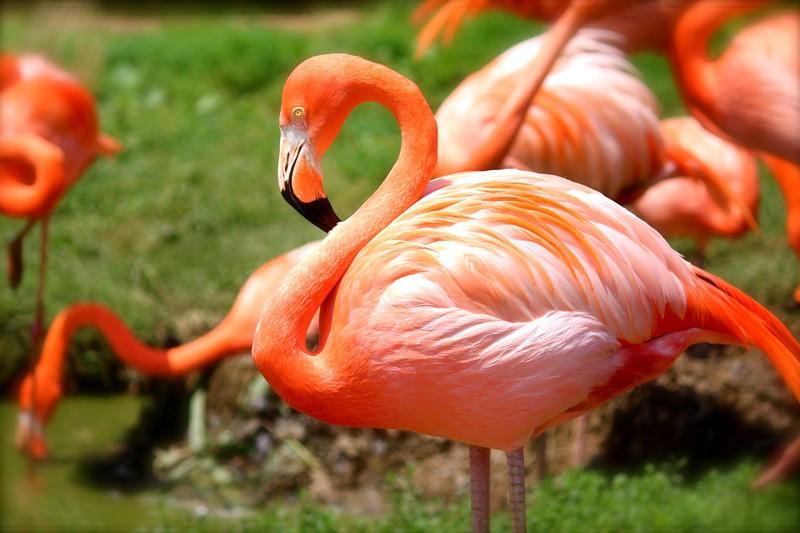 Burung Flamingo (TheMysteriousWorld)