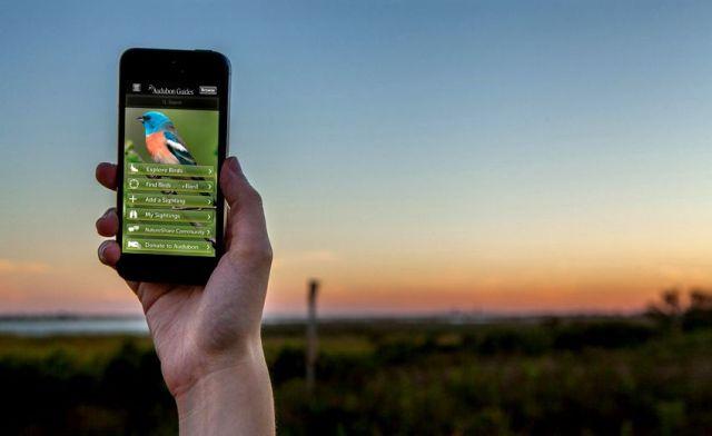 12 Aplikasi Suara Burung Kicau Terbaik Untuk Masteran Gratis