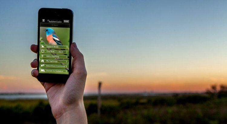 Aplikasi Suara Burung (audubon.org)