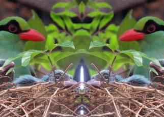 Burung Murai Hijau Jawa (marketbusinessnews.com)