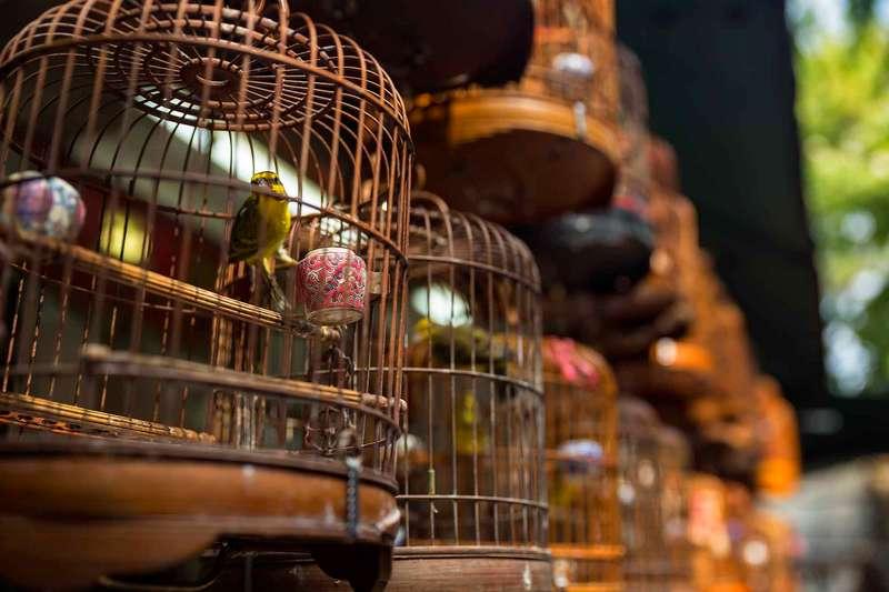 Daftar Harga Burung Kicau Terbaru di Indonesia Update Setiap Bulan