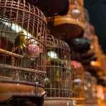 Daftar Harga Burung Kicau (maierandmaierphotography.com)