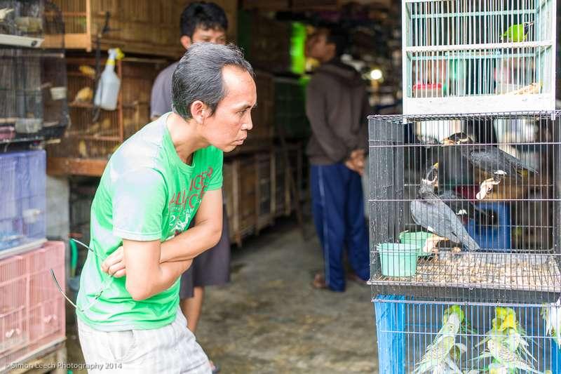Pembeli burung (Simon Leech Photography 2014)