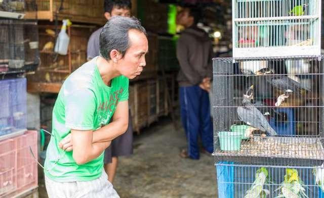 4 Hal yang Tidak Boleh Dilakukan Setelah Membeli Burung