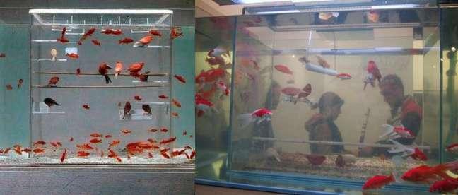 Sangkar di dalam aquarium (pinterest.com)