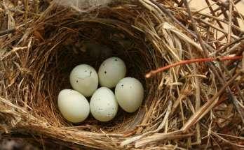 Telur Burung (wikimedia.org)