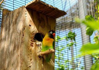 Lovebird (leesbird.com)