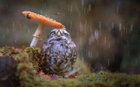Burung di musim hujan (www.goodwp.com)