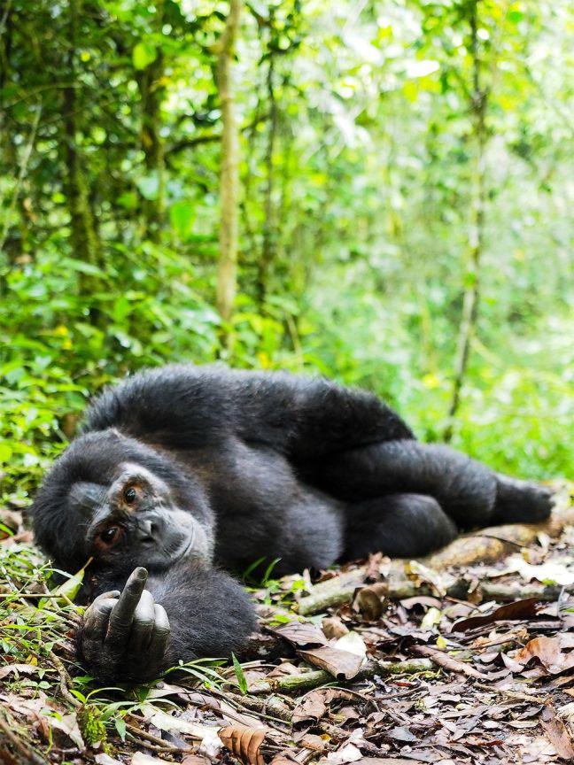 (Photo by Gil Gofer The Comedy Wildlife Awards Mercury Press)
