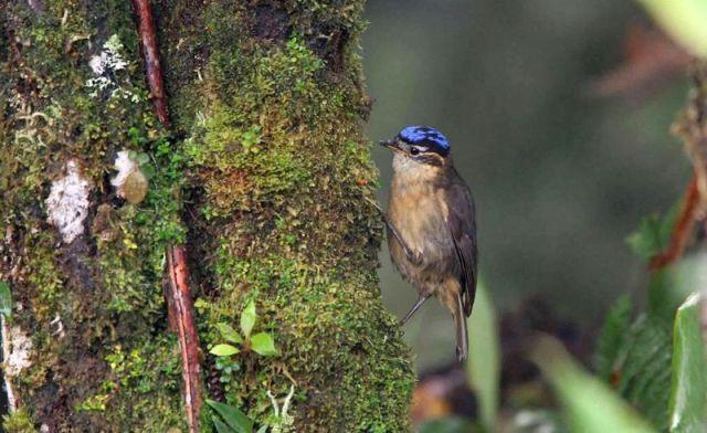8 Jenis Burung Paling Beracun di Dunia terdapat di Papua