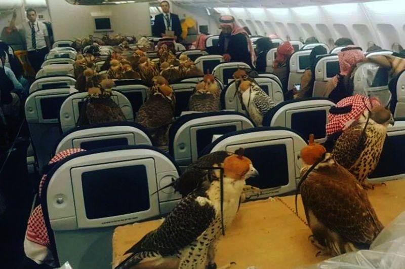 Orang Kaya Ini Ajak 80 Burung Elang Naik Pesawat dengan Biaya Ratusan Juta