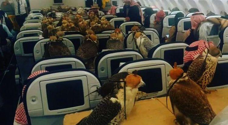 Burung Elang naik pesawat (reddit.com)