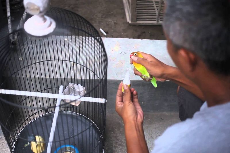 7 Tips Rahasia Merawat Burung yang Dibocorkan Pemilik Lovebird Kusumo