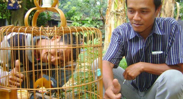 Memelihara burung (burungpekalongan.blogspot.co.id)