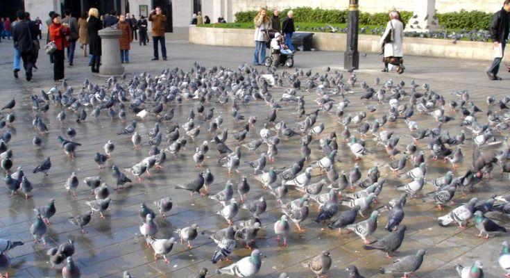 Burung di Turki (KeywordSuggest.org)