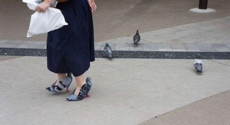 Burung Merpati dijadikan sepatu (Boredpanda.com)