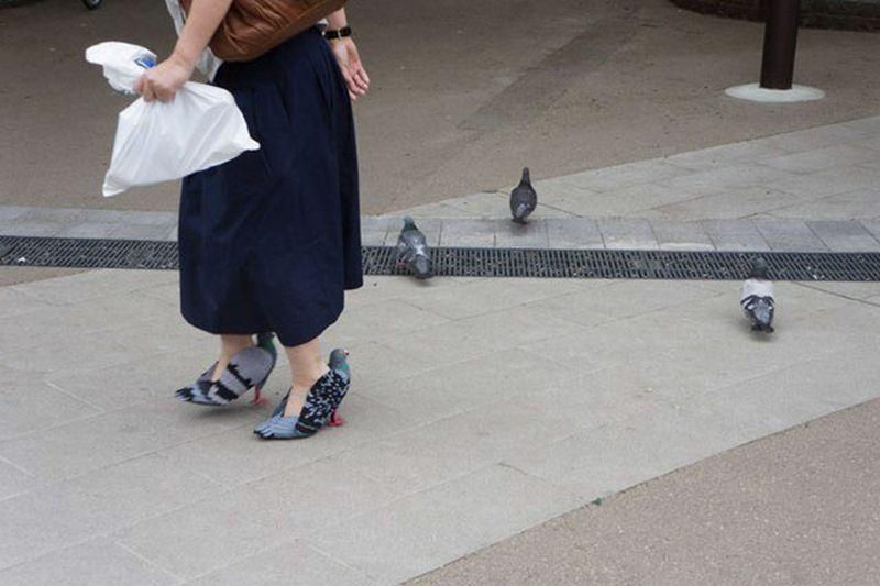 Unik, Ternyata Burung Merpati Bisa Dijadikan Sepatu, Begini Cara Membuatnya