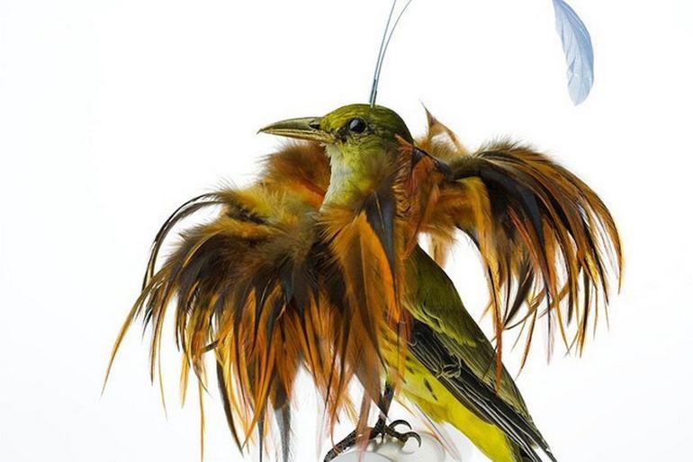 Burung cantik 13 (Karleyfeaver.com)