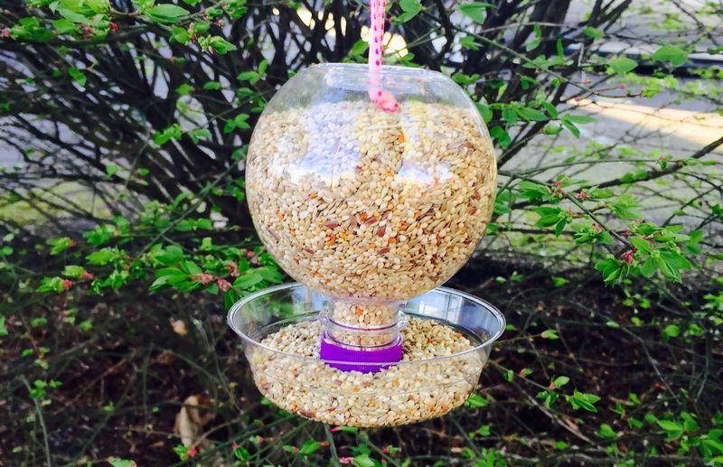 Cara Mudah Membuat Tempat Pakan dan Minum Burung Otomatis dari Botol Bekas