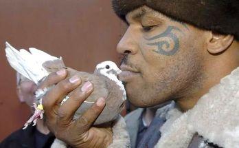 Burung Merpati dan Mike Tyson (veja.abril.com.br)